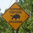Stock Photo: Tortoise crossing