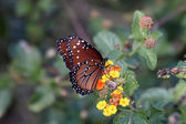 Una mariposa colocada — Foto de Stock