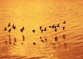 Oiseaux survolant la mer — Photo