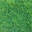 Green grass texture for web — Stock Photo