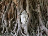 Statue de bouddha dans les racines de l'arbre à, ayutthaya, thaïlande — Photo