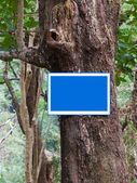 Label on tree in forest — Stock Photo