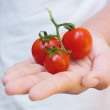 Tomatoes in woman hand — Stock Photo