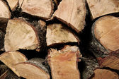 Wood logs — Stock Photo