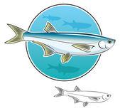 Herring fish — Stock Vector
