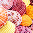 Stock Photo: Scallops.