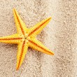 Stock Photo: Summer seastar.