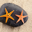 Stock Photo: Two seastars.