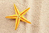 летние seastar. — Стоковое фото