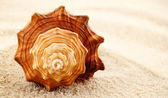 Spiral seashell. — Stock Photo
