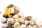 Seashells. — Stock Photo