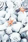 Seashells toned. — Stock Photo