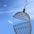 Freedom concept. Escaping from the cage — Stock Photo