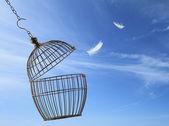 Conceito de liberdade. escapar da gaiola — Foto Stock