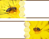 Honeybee banners — Stock Photo