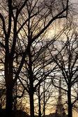 Winter Trees, Paris — Stock Photo