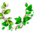 Branch with fresh green leaves - Stockfoto