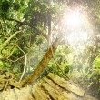 Green wild tropical forest with ray of light - Stockfoto