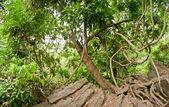 Verde foresta tropicale selvaggia a dalat, vietnam — Foto Stock