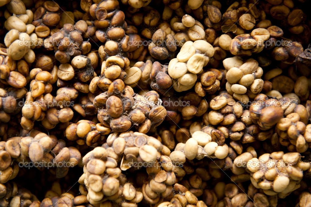 Is civet coffee worth the price  The Guardian