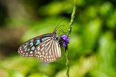 Butterfly on Blue Flower — Стоковое фото