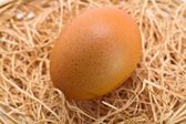 Brown Egg on Straw Bedding — Stock Photo