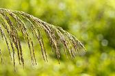 Gräs och grön bakgrund — Stockfoto