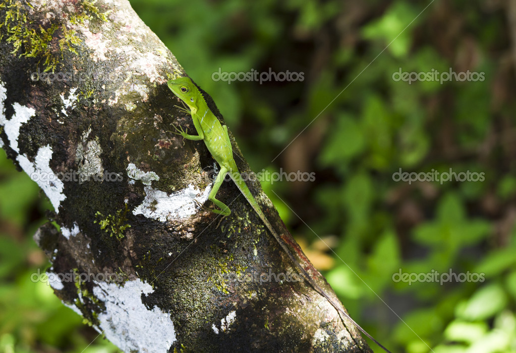 Green lizard on a tree bark with blurry background — Stock Photo #9139358