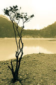 Tree Silhouette and Lake — Stock Photo