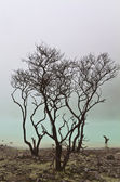Trees and Green Lake — Stock Photo