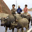 Vietnamese Children Riding Water Buffalo — Stock Photo