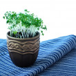 Cress salad in the pot — Stock Photo