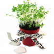 Cress salad isolated — Stock Photo