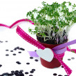 Cress salad — Stock Photo
