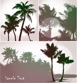 Palm trees, collection — Stock Vector