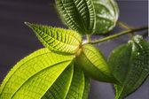 Leaf — Foto de Stock