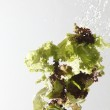 Close up of the washing salad with water splash — Stock Photo