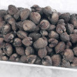 Stock Photo: Clams