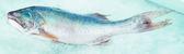 Fish — Stockfoto