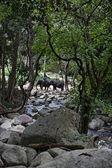 Thailand, koh samui (samui island), elefanter på vattenfallet namuang — Stockfoto