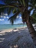 Tajlandia, koh samui (wyspie samui), widok drzewa plaża i palmy kokosowe — Zdjęcie stockowe