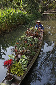 Thailand, Bangkok, The Rose Garden, a thai gardener carries some tropical plants on his boat — Stock Photo