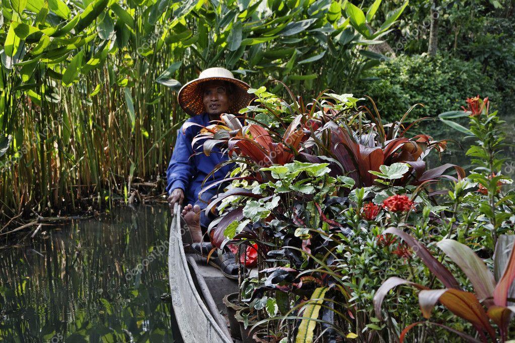 plantas jardins tropicais : plantas jardins tropicais: plantas tropicais em seu barco — Foto Stock © agiampiccolo #9997242