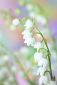 Lily-of-the-valley — 图库照片