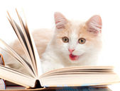 Little cat read a book — Stock Photo