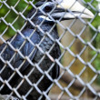 Large parrot in a cage — Stock Photo