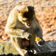 Stock Photo: The animal life of a monkey