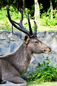 A background of wild deer — Stock Photo