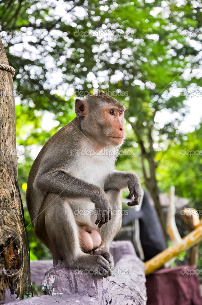The animal life of a monkey — Stock Photo #8229330