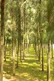 Garden green — Stock Photo